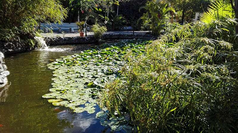 Uno dei Parchi di Tenerife più belli: il Giardino delle Orchidee