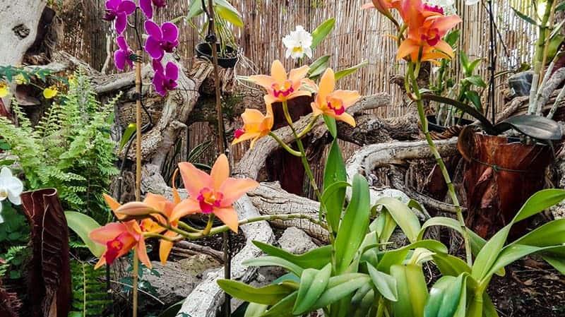 Giardino Sitio Litre e le sue 350 specie di orchidee